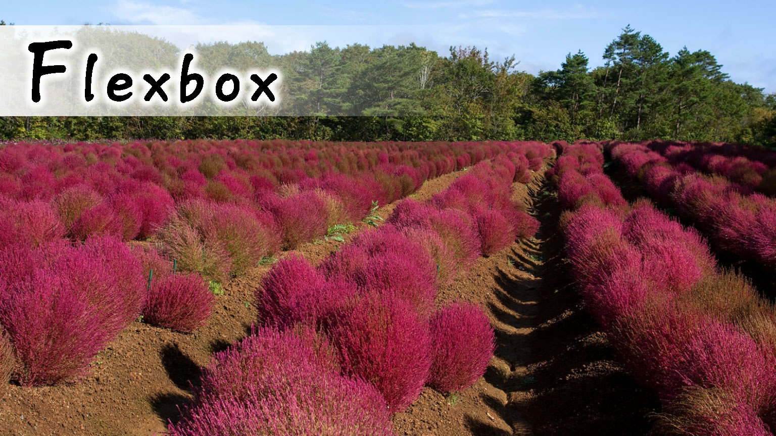 【CSS】Flexboxの使い方(基礎編)